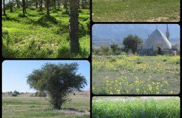 بهار زودرس در زمستان و لبخند سبز زمین به شهرستان بستک