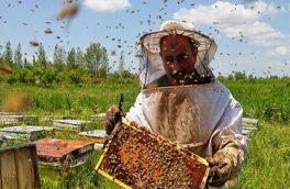 آغاز کوچ زنبورداران به شهرستان بستک