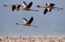 عدم مشاهده تلفاتی از پرندگان مهاجر در شهرستان بستک